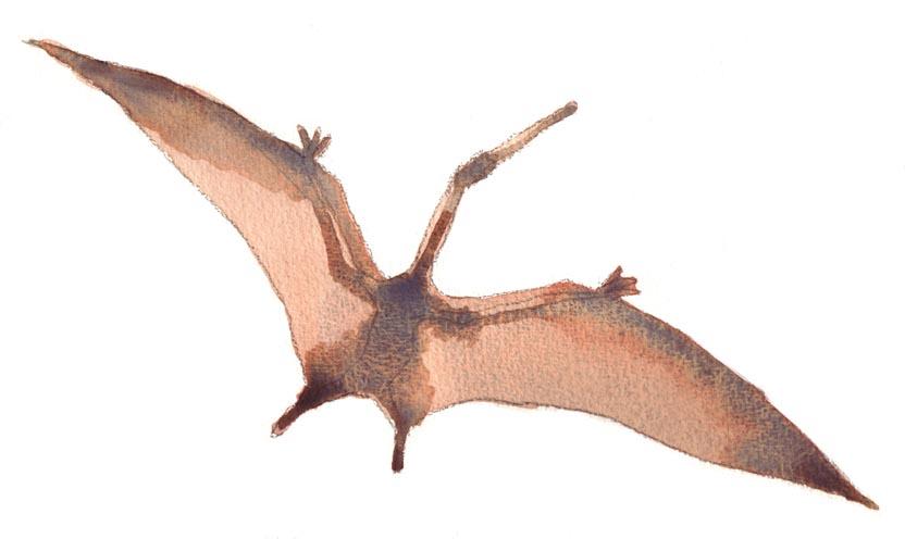 Flying Pterodactyl Toy